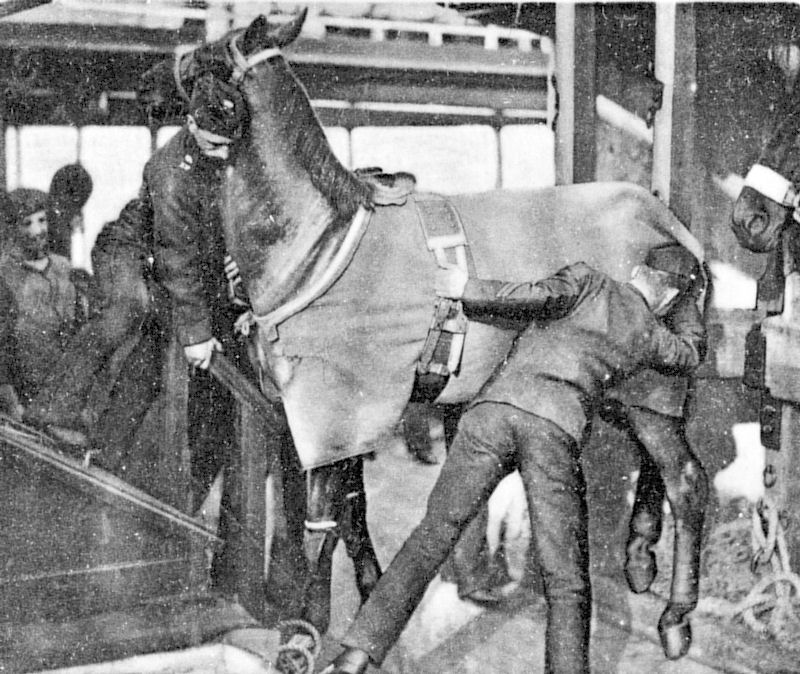 Rebellious charger being loaded into stalls on ship